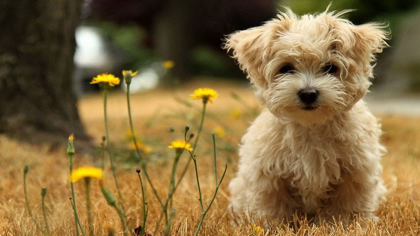 top 10 fanpage for pets lover